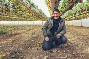 Osamah Abu Al-Rub, a strawberry farmer in the West Bank, began receiving USAID assistance in 2014 (USAID via Flickr)