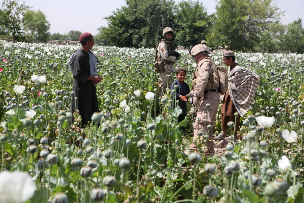 Opium_poppies_in_Helmand_-a